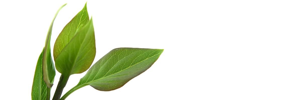 Green Gift környezetbarát reklámajándék
